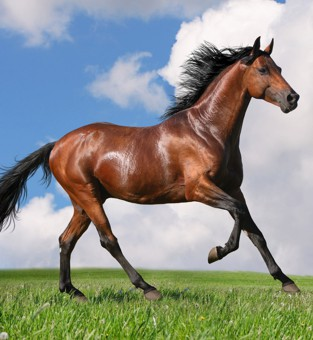 Increase Your Horse's Muscle Mass and Health