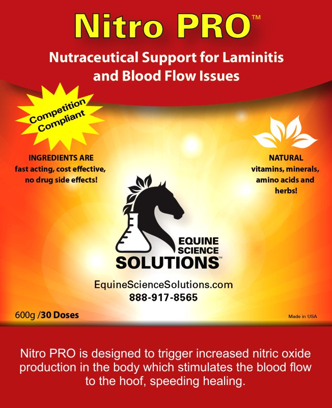 Treatment of Laminitis and Blood Flow in horses