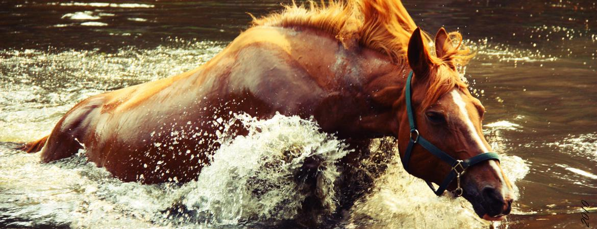 Testimonials for Horse Temperament Typing Specialist