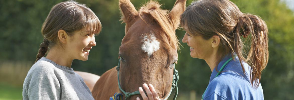 Contact Information for Horse Temperament Typing Specialist